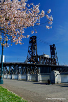 Cherry Blossoms PDX
